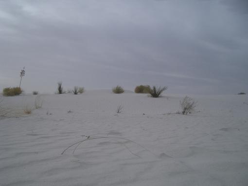 Vegetation is sparse