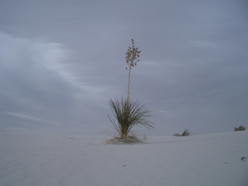 Vegetation is sparse, but dramatic