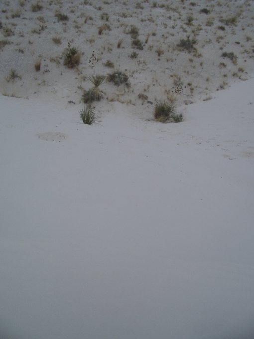 A typical sand run at White Sands--short and steep