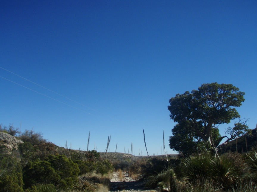 Yucca-lined Trail