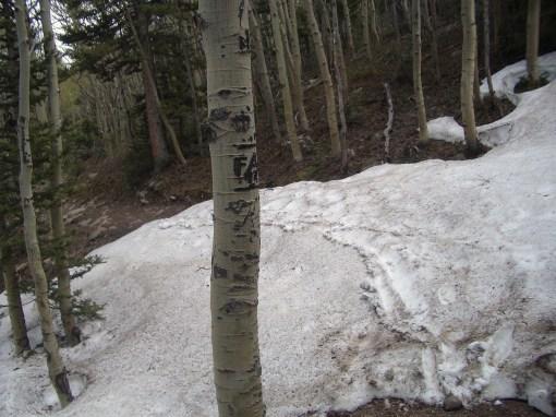 Mountain biking in May means random snow banks. Fun to ride through!