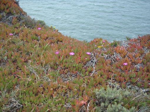 Vegetation thrives among them thar hills